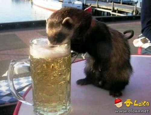 drunk-animals-0
