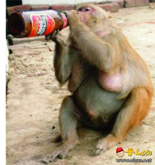 drunk-animals-14