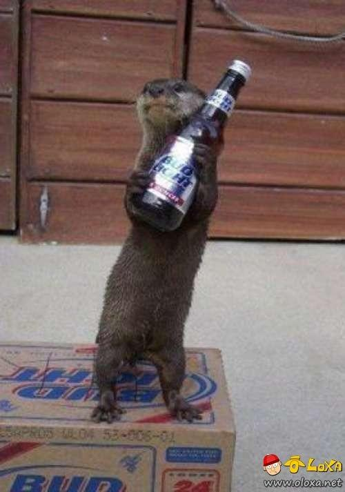 drunk-animals-3