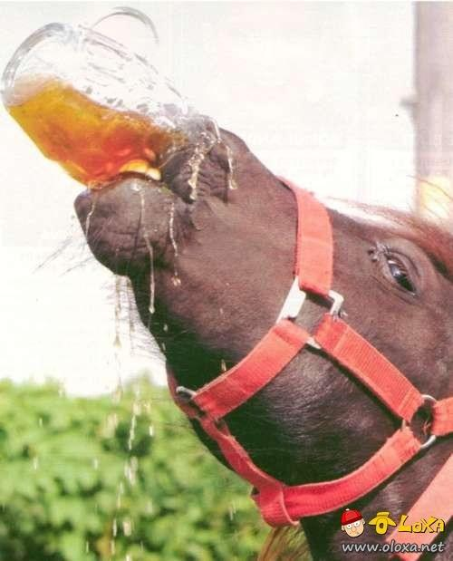 drunk-animals-8