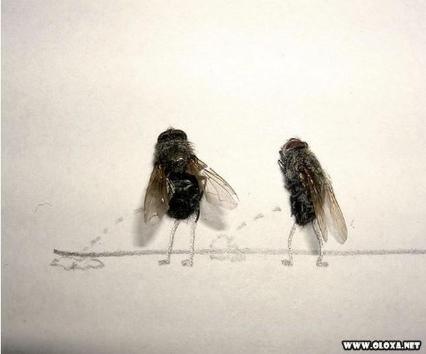 A arte com moscas mortas