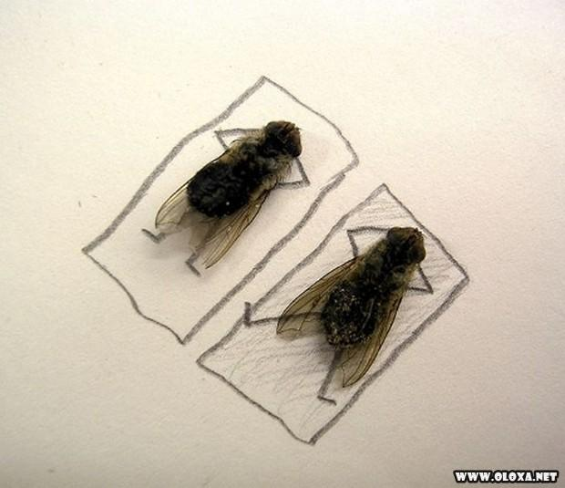 A arte com mosquitos mortos