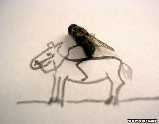 mosquitos mortas também é arte!