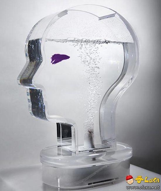 aquarios-personalizados-5