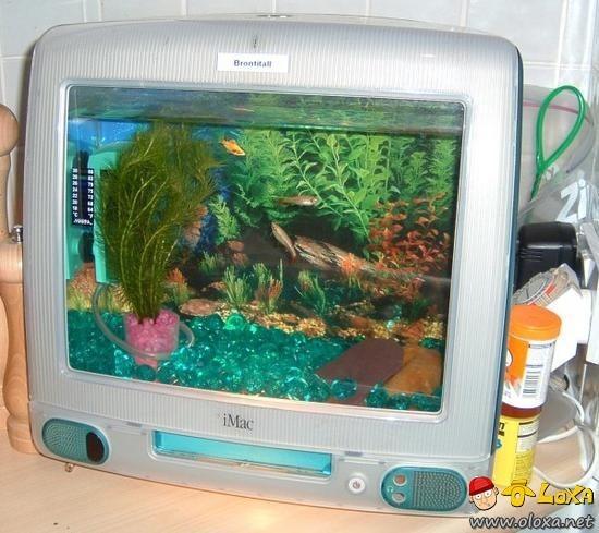 aquarios-personalizados-6
