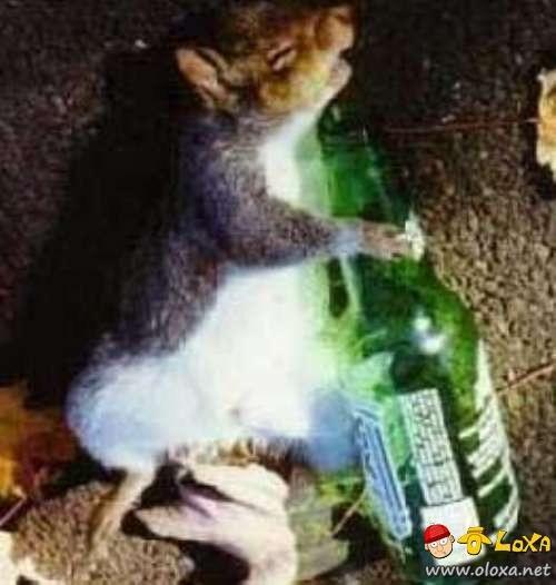 drunk-animals-11
