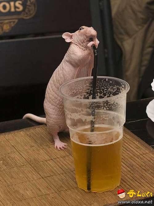 drunk-animals-18
