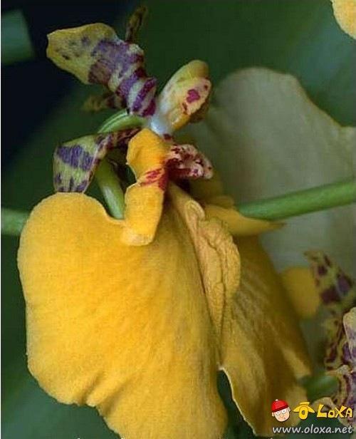 xuranha flowers (4)