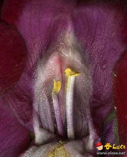 xuranha flowers (6)