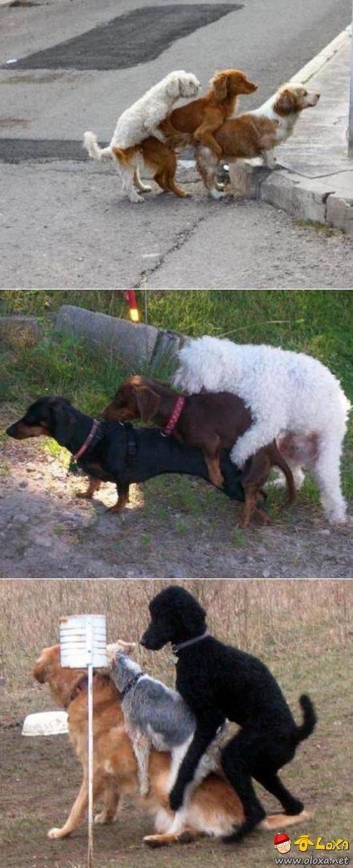 suruba canina