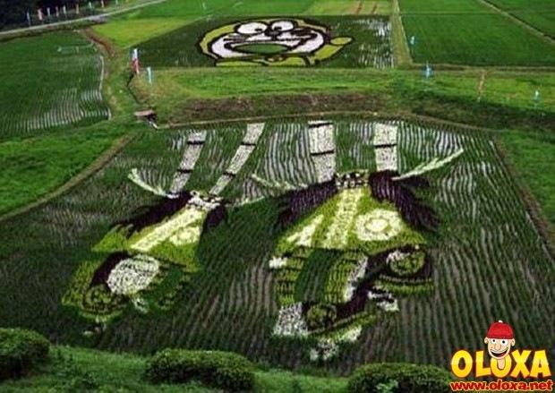 arte em plantação de arroz (13)