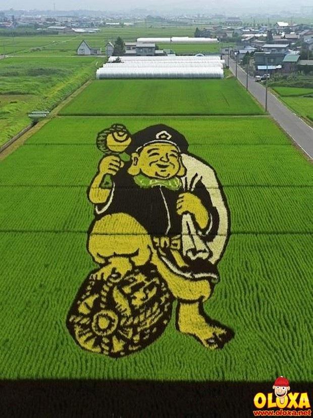 arte em plantação de arroz (5)