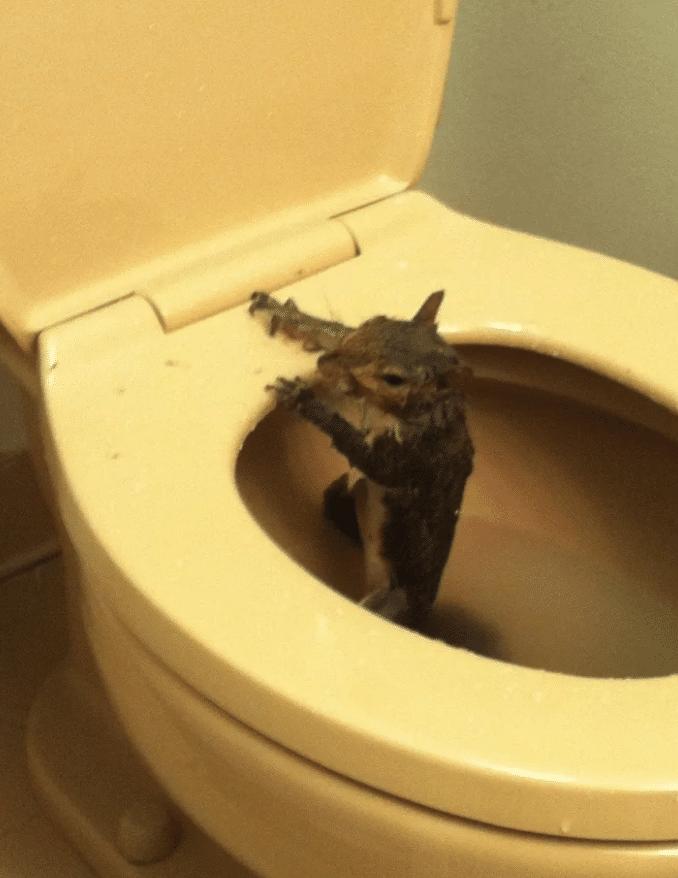 Algumas imagens que faram você ter medo de ir ao banheiro