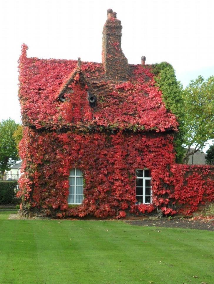 Conheça algumas casas que as plantas tomaram conta 8