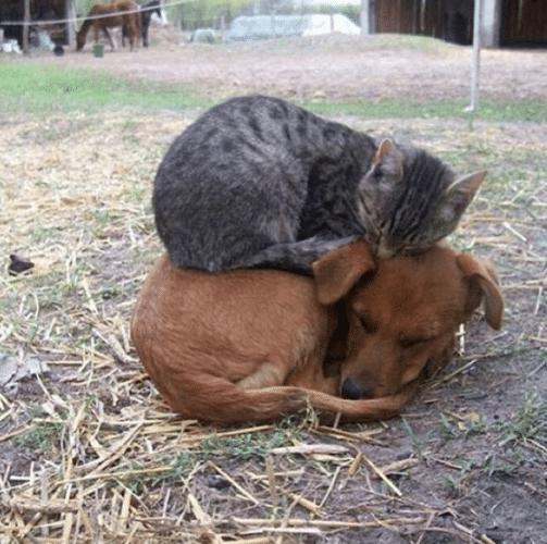 Alguns animal que nasceram muito diferente de todos os outros